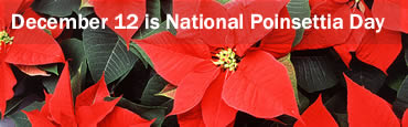 National Poinsettia Day - Dec 12th